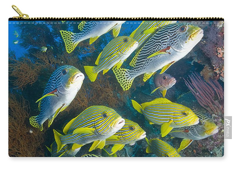 Sweetlip Fish Carry-all Pouch featuring the photograph Yellow And Blue Striped Sweeltip Fish by Mathieu Meur
