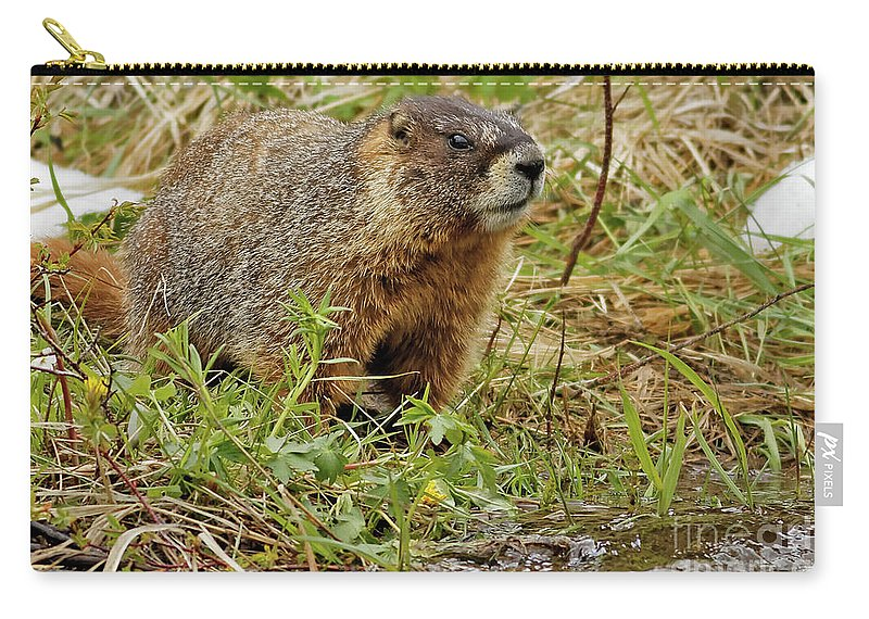 Marmot Carry-all Pouch featuring the photograph Yellow-bellied Marmot by Natural Focal Point Photography