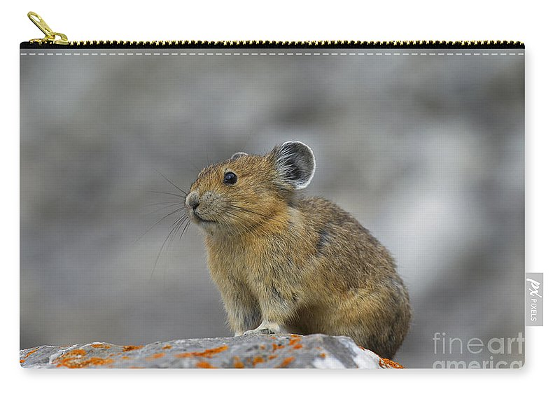 American Pika Carry-all Pouch featuring the photograph 151221p238 by Arterra Picture Library