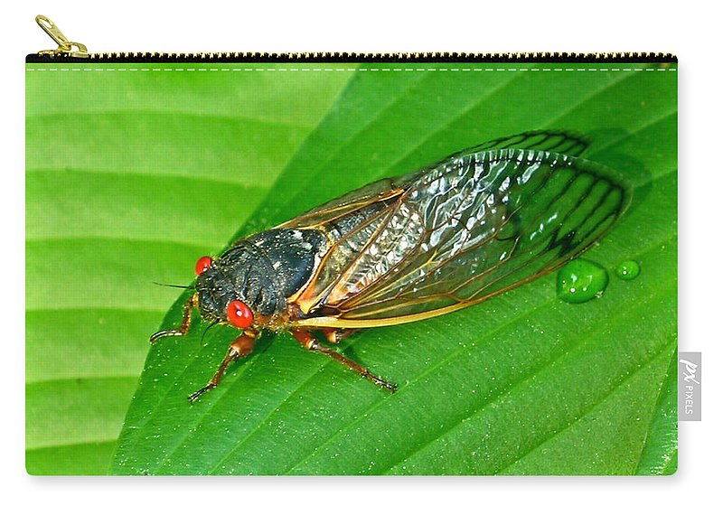 17 Carry-all Pouch featuring the photograph 17 Year Periodical Cicada by Douglas Barnett