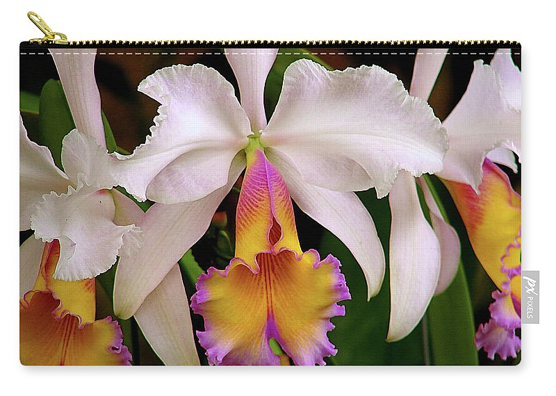 Flowers Carry-all Pouch featuring the photograph 180 Degrees by Blair Wainman