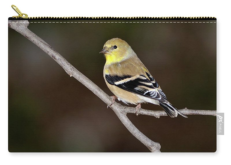 American Goldfinch Carry-all Pouch featuring the photograph American Goldfinch by Betty LaRue