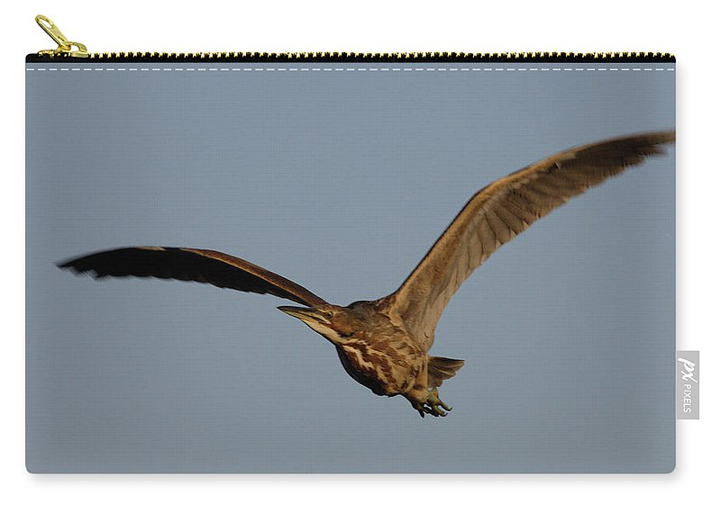 Waterfowl Carry-all Pouch featuring the photograph An American Bittern Comes Flying In. by Mark Wallner