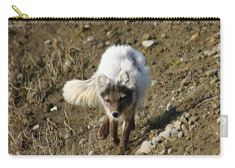 Arctic Fox Carry-all Pouch featuring the photograph Arctic Fox by Anthony Jones