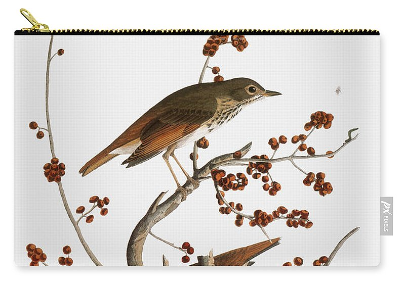 1838 Carry-all Pouch featuring the photograph Audubon: Thrush by Granger
