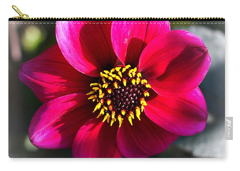 Flowers Carry-all Pouch featuring the photograph Autumn Flowers by Jeremy Hayden