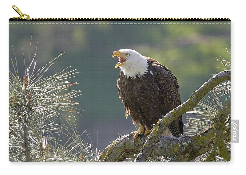 Birds Carry-all Pouch featuring the photograph Bald Eagle by Doug Herr