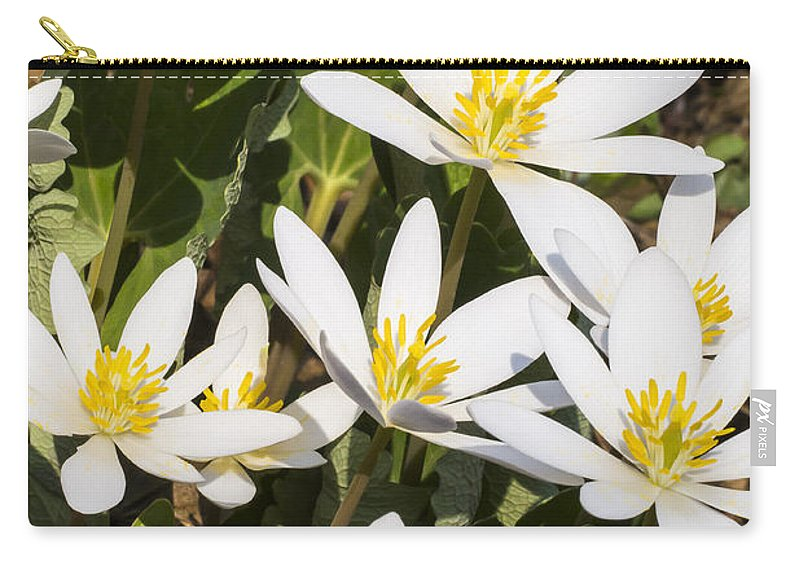 Flowers Carry-all Pouch featuring the photograph Bloodroot Flowers 2 by Steven Ralser