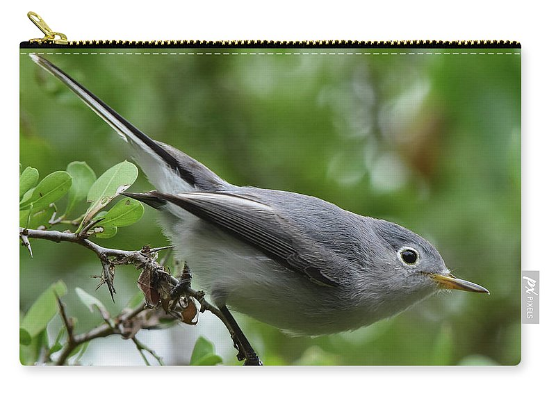 Warbler Carry-all Pouch featuring the photograph Blue-gray Gnatcatcher by Dwight Eddington