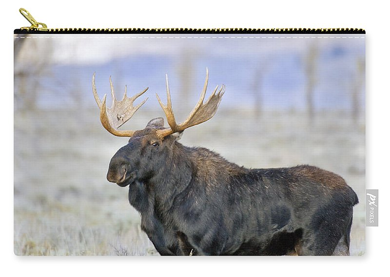 Bull Carry-all Pouch featuring the photograph Bull Moose On Alert by Gary Langley
