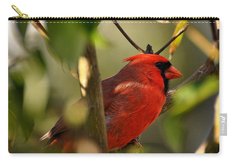 Male Cardinal Carry-all Pouch featuring the photograph Cardinal 2 by Todd Hostetter