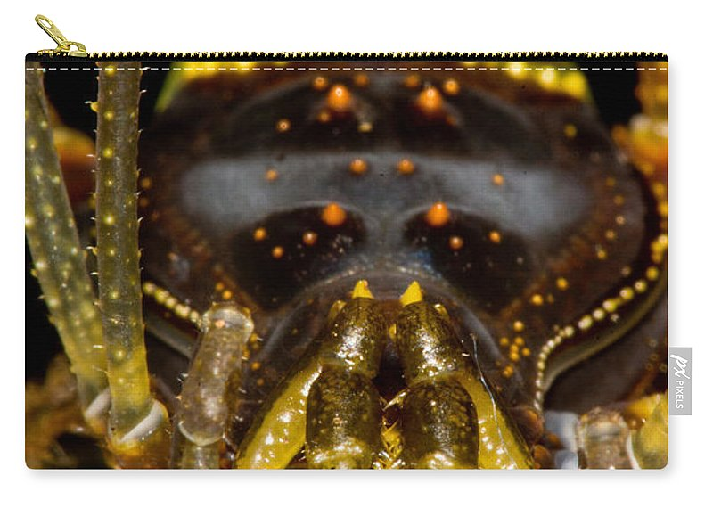 Gonyleptid Harvestmen Carry-all Pouch featuring the photograph Colorful Harvestman by Dant� Fenolio