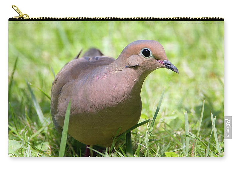 Wildlife Carry-all Pouch featuring the photograph Dove by David Stasiak