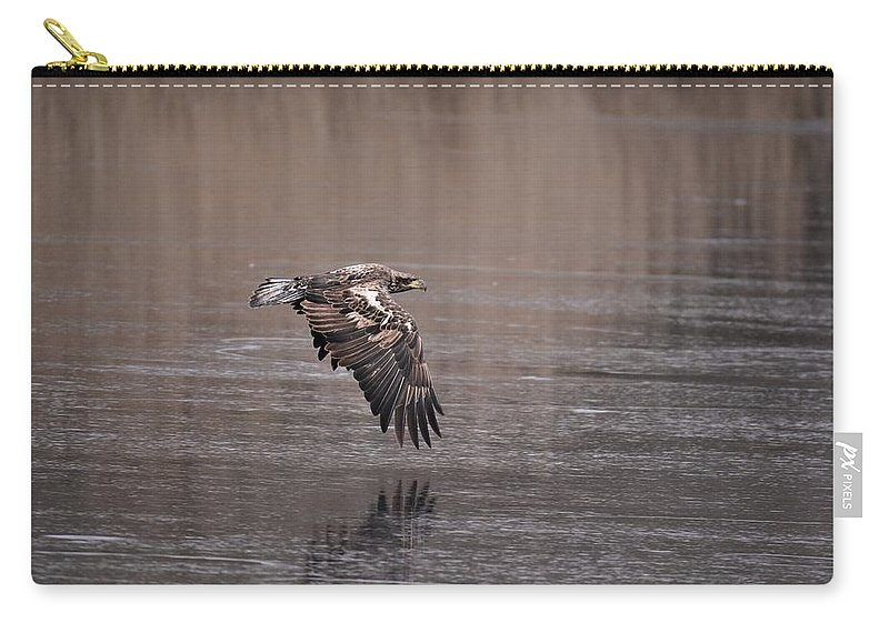 Immature Eagle Carry-all Pouch featuring the photograph Eagle by John Adams