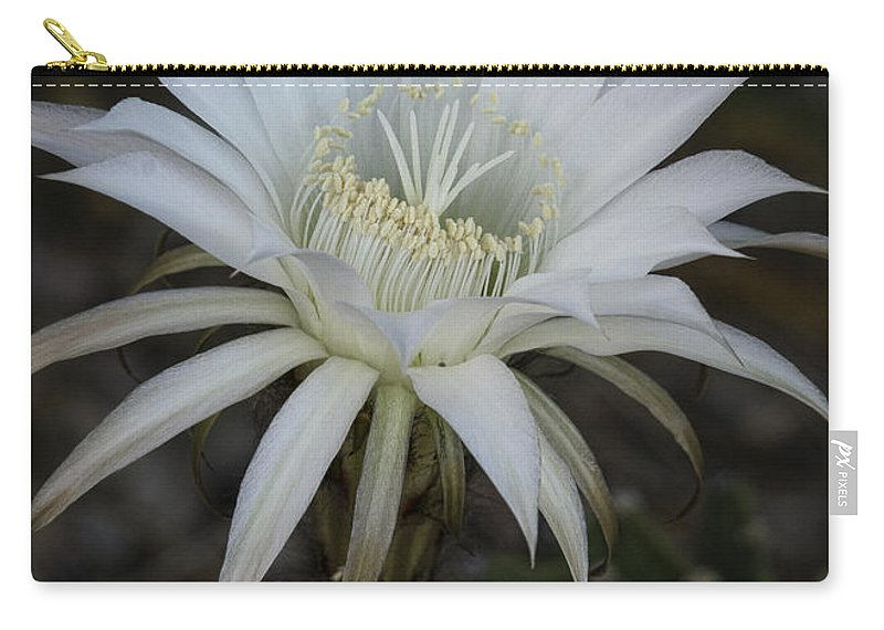 Echinopsis Carry-all Pouch featuring the photograph Echinopsis by Saija Lehtonen