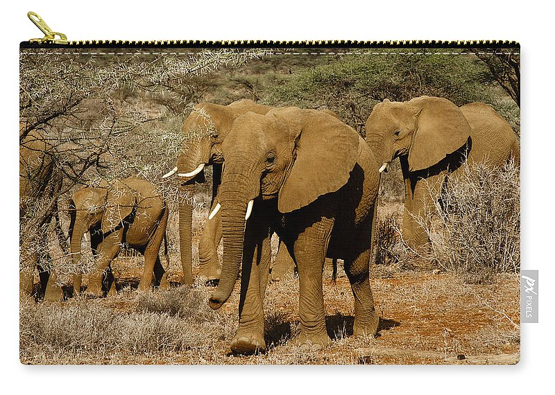 Africa Carry-all Pouch featuring the photograph Elephant Parade by Michele Burgess