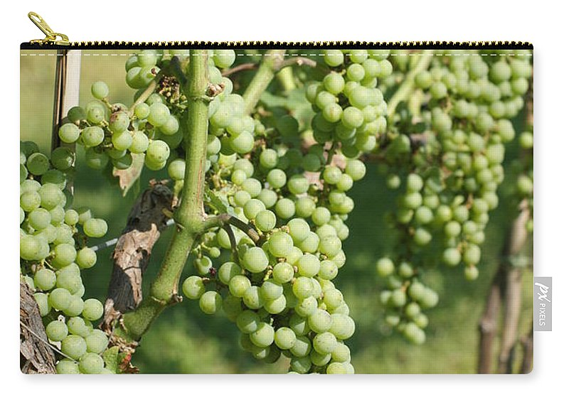 Wine Carry-all Pouch featuring the photograph Grapevine by Heidi Poulin