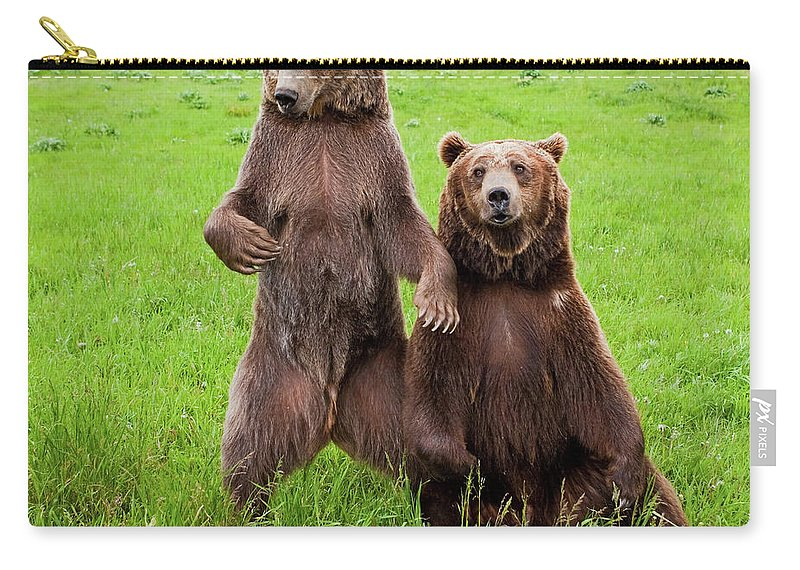 Adult Carry-all Pouch featuring the photograph Grizzly Bear Arctos Ursus by David Burke