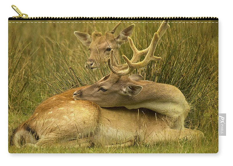 Fallow Deer Carry-all Pouch featuring the photograph Having A Rest by Angel Ciesniarska