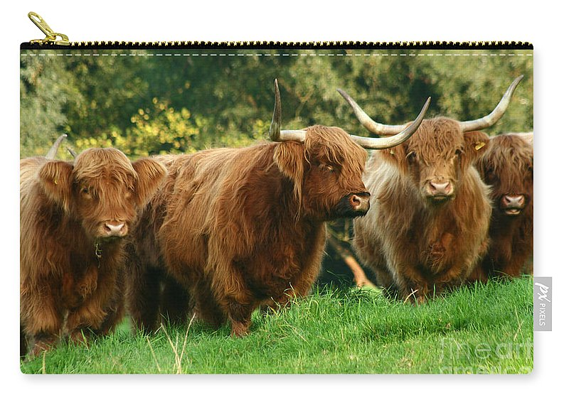 Cow Carry-all Pouch featuring the photograph Highland Cattle by Angel Tarantella