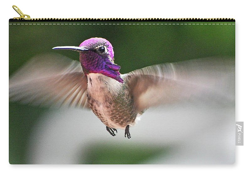 Animal Carry-all Pouch featuring the photograph Juvenile Male Anna's In Flight by Jay Milo