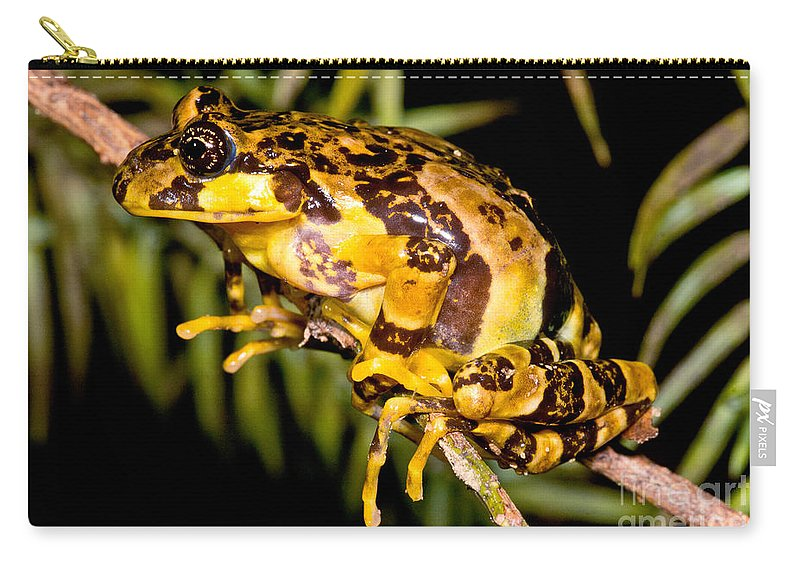 Marbled Wood Frog Carry-all Pouch featuring the photograph Marbled Wood Frog by Dant� Fenolio