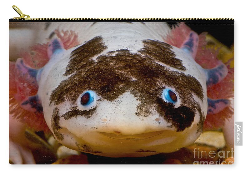Ambystomatidae Carry-all Pouch featuring the photograph Mexican Axolotl by Dant� Fenolio