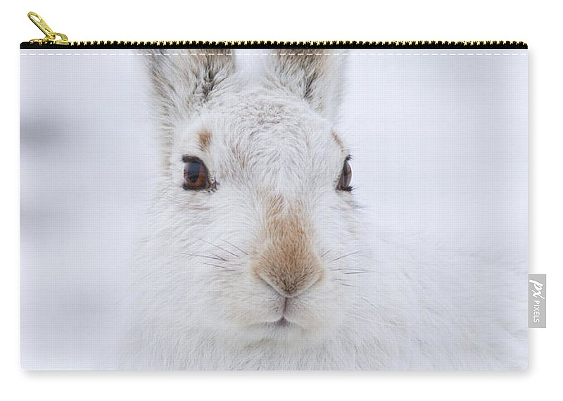 Mountain Hare Carry-all Pouch featuring the photograph Mountain Hare In The Snow - Lepus Timidus #3 by Karen Van Der Zijden