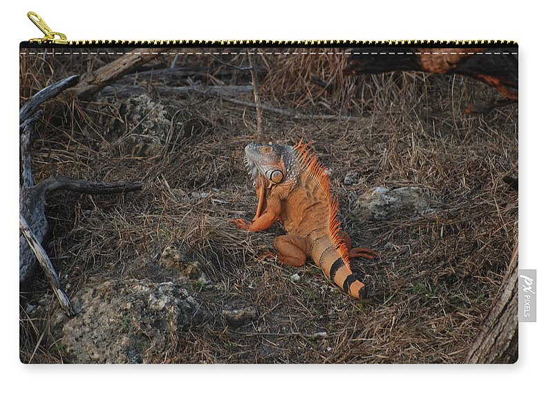 Brush Carry-all Pouch featuring the photograph Orange Iguana by Rob Hans
