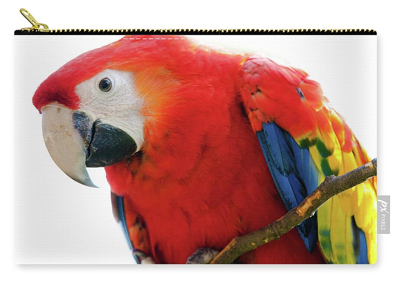 Parrot Carry-all Pouch featuring the photograph Parrot by Hristo Shanov