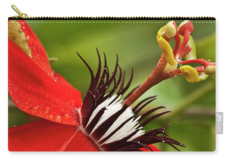 Nature Carry-all Pouch featuring the photograph Passionate Flower by Heiko Koehrer-Wagner