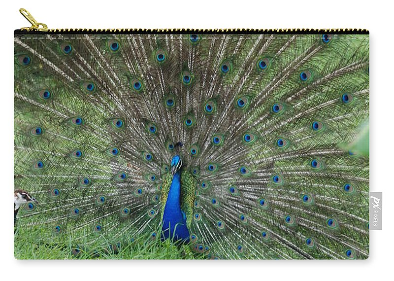 Animals Carry-all Pouch featuring the photograph 2 Peacocks And A Black Pussy Cat by Rob Hans