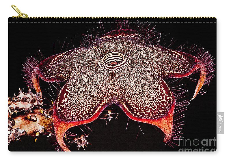 Persian Carpet Flower Carry-all Pouch featuring the photograph Persian Carpet Flower by Dant� Fenolio