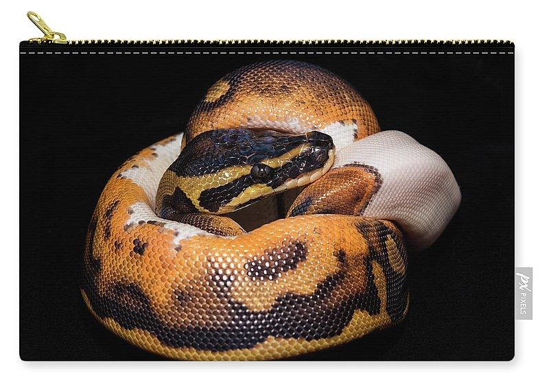 Python Carry-all Pouch featuring the photograph Piedbald Ball Python by Darlene Munro