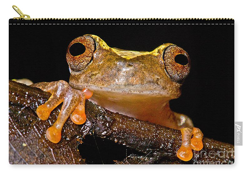 Ross Allen's Treefrog Carry-all Pouch featuring the photograph Ross Allens Treefrog by Dant� Fenolio