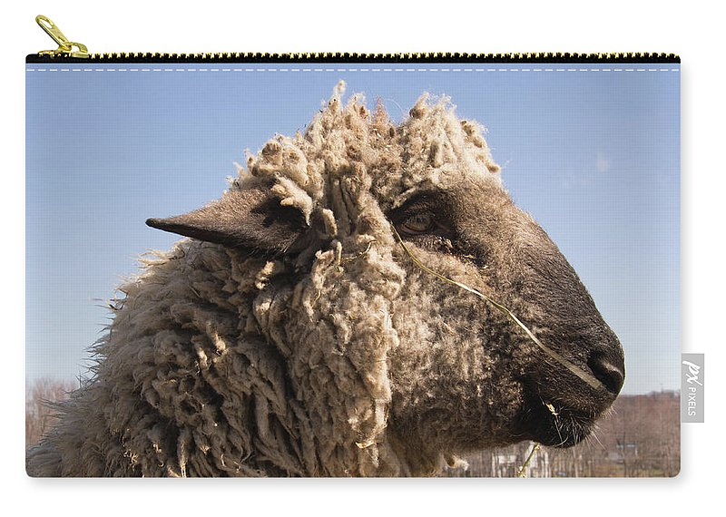 Sheep Carry-all Pouch featuring the photograph Sheep In Profile by Diane Schuler
