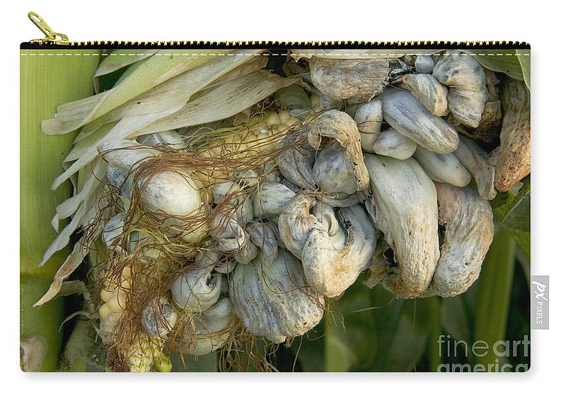 Corn Carry All Pouch Featuring The Photograph Smut Gall Fungus On A Ear By