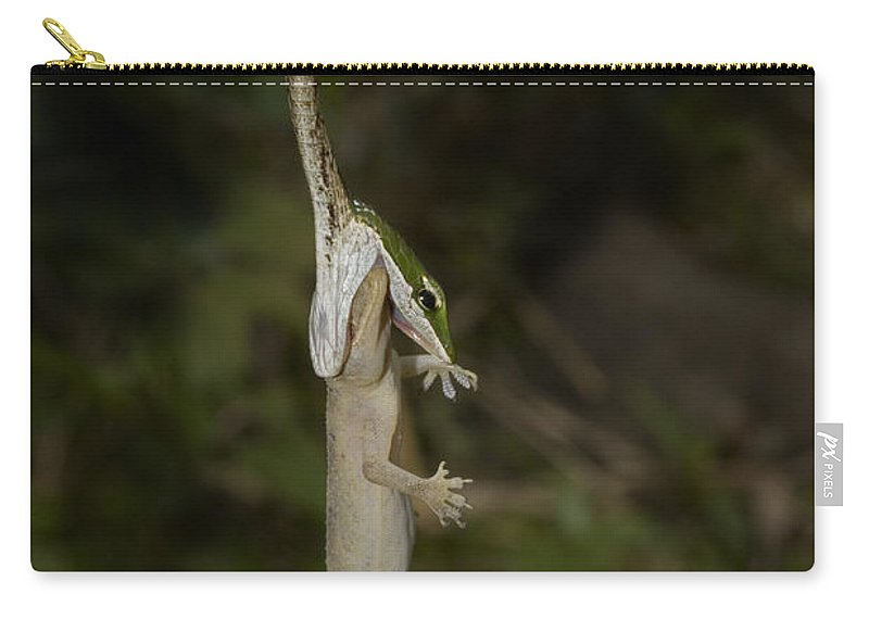 Kirtland's Tree Snake Carry-all Pouch featuring the photograph Tree Snake Eating Gecko by Andrew Routh
