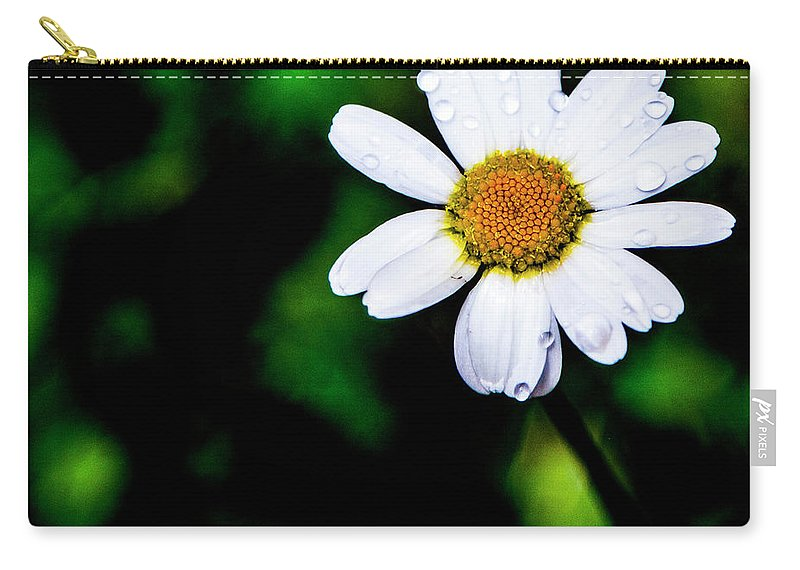 Carry-all Pouch featuring the photograph Summer Rams by Angus Hooper Iii
