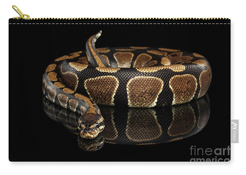 Snake Carry-all Pouch featuring the photograph Ball Or Royal Python Snake On Isolated Black Background by Sergey Taran