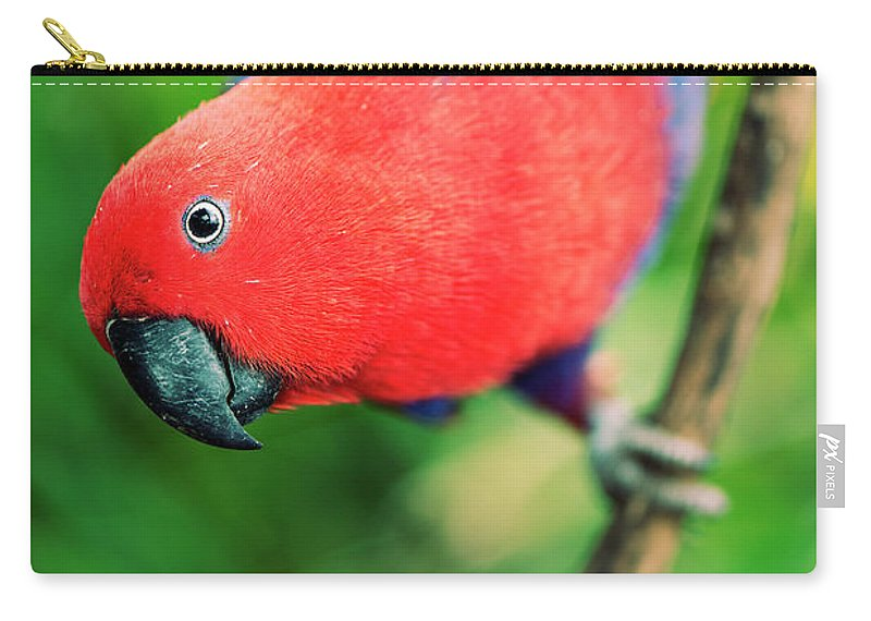 Crimson Carry-all Pouch featuring the photograph Crimson Rosella by Rob D