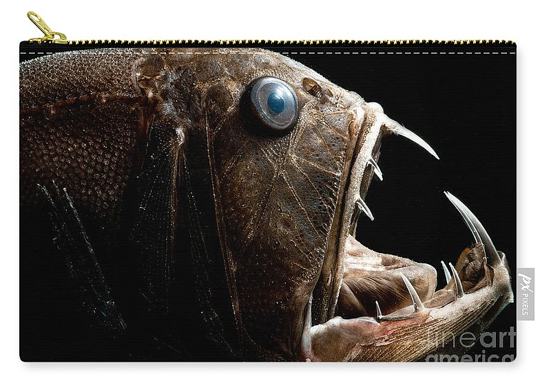 Fangtooth Carry-all Pouch featuring the photograph Deep Sea Fangtooth by Dant� Fenolio
