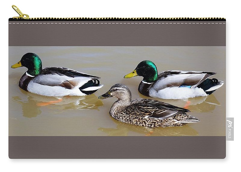 Ducks Carry-all Pouch featuring the photograph Ducks by Anthony Schafer