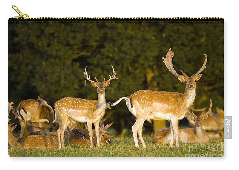 Fallow Deer Carry-all Pouch featuring the photograph Fallow Deer by Angel Ciesniarska