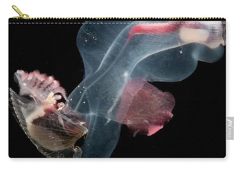 Heteropod Carry-all Pouch featuring the photograph Heteropod Mollusk by Dant� Fenolio