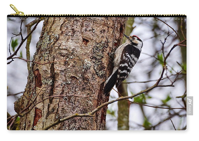 Finland Carry-all Pouch featuring the photograph Lesser Spotted Woodpecker by Jouko Lehto