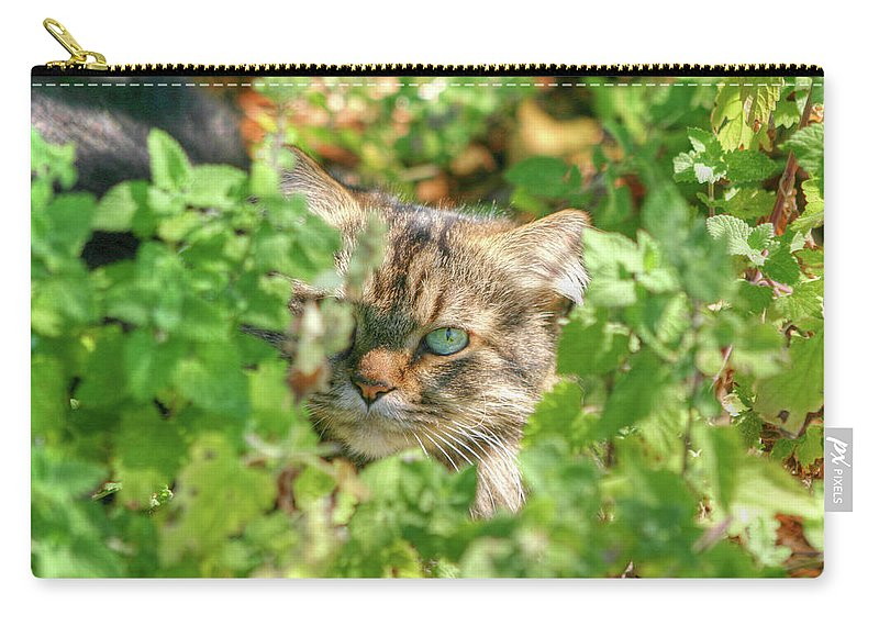 Maine Coon Carry-all Pouch featuring the photograph Maine Coon by Michael Munster