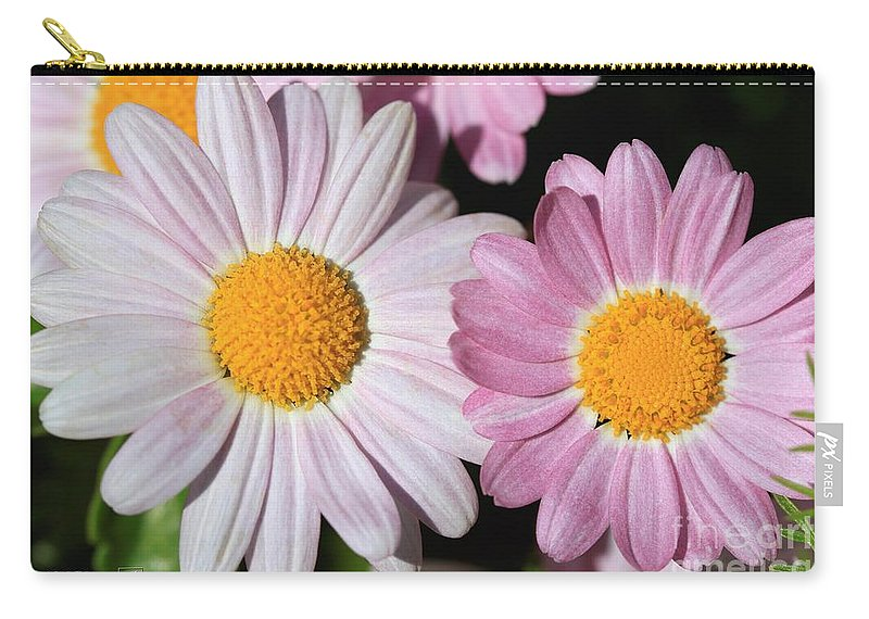 Mccombie Carry-all Pouch featuring the photograph Marguerite Daisy Named Petite Pink by J McCombie