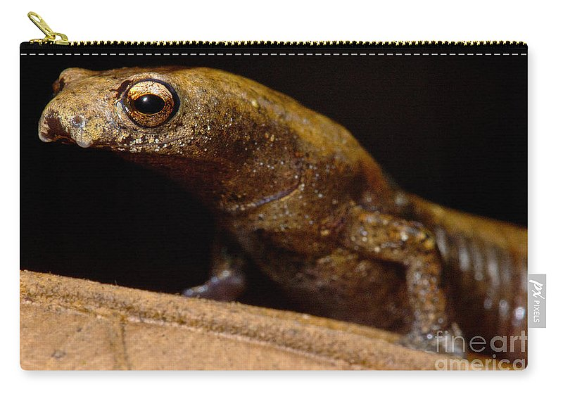 Nauta Palm Foot Salamander Carry-all Pouch featuring the photograph Nauta Palm Foot Salamander by Dant� Fenolio