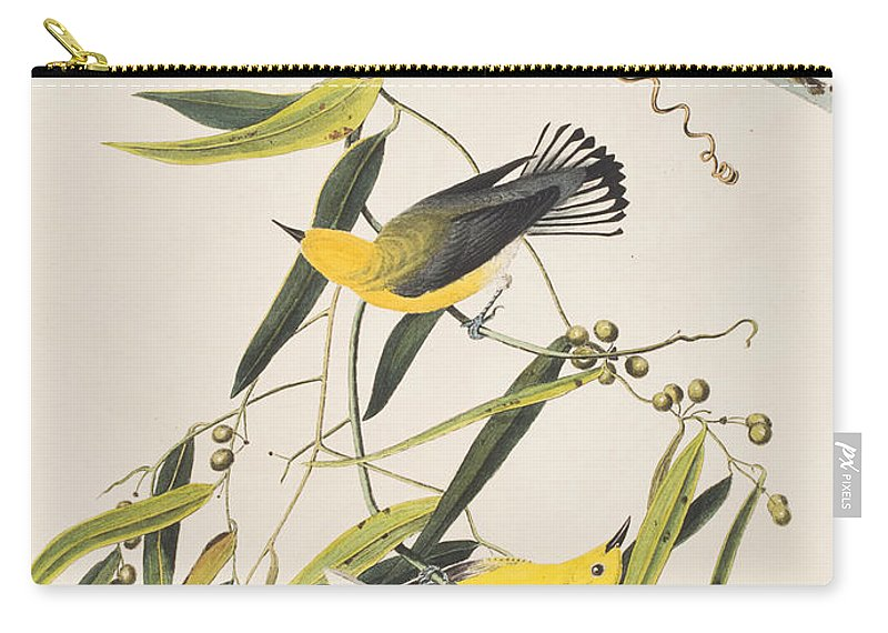 Prothonotary Warbler Carry-all Pouch featuring the painting Prothonotary Warbler by John James Audubon